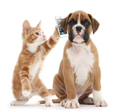 dog and cat on a phone