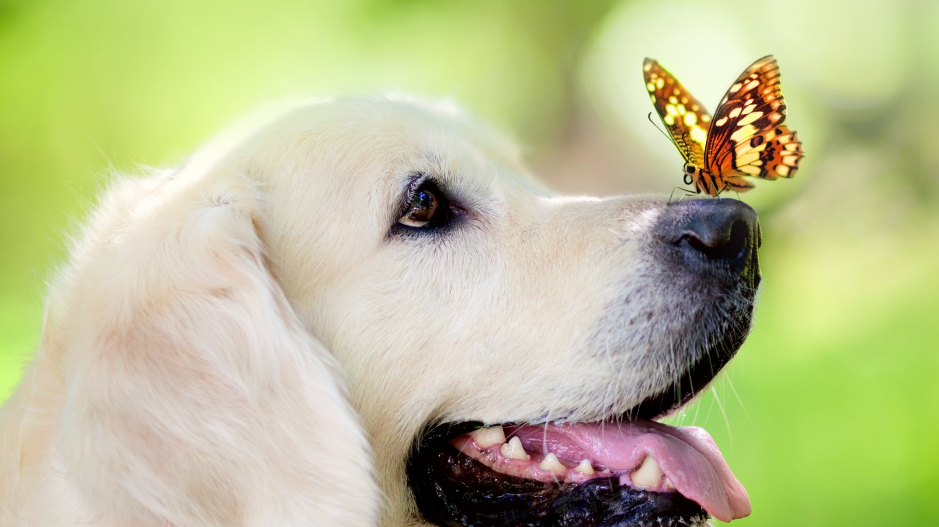 Dog_and_Butterfly