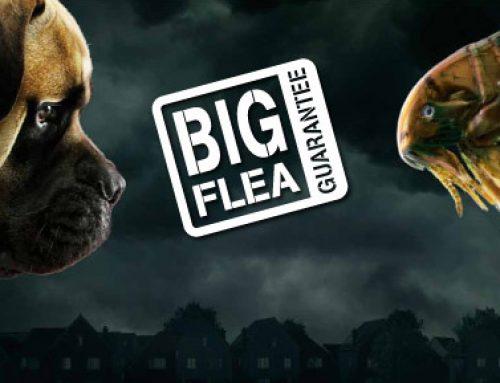 Get the Big Flea Guarantee